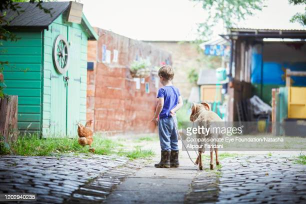 boy walking goat in urban farm - compassionate eye foundation stock pictures, royalty-free photos & images