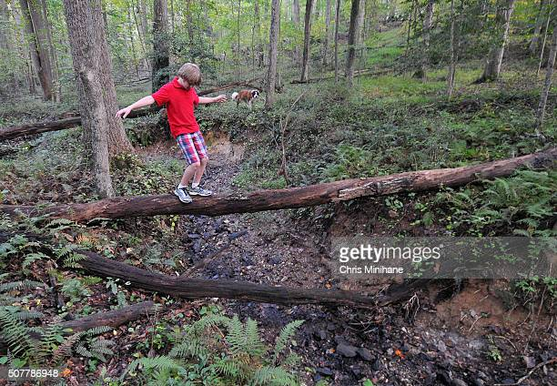 Boy walking on a tree in the forest with his dog.