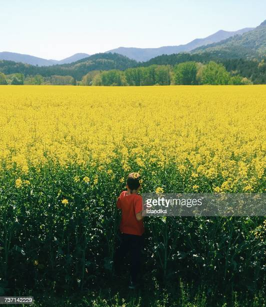 Boy walking through a rapeseed field