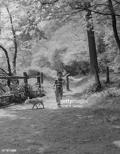boy walking with dog in forest - mamífero con garras fotografías e imágenes de stock