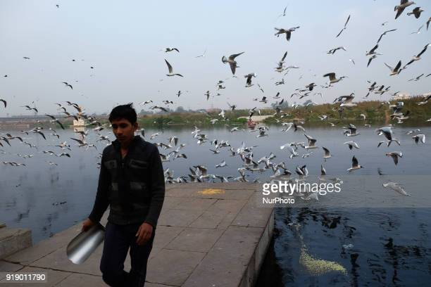 Boy walks after feeding the migratory seagull birds over the banks of Yamuna river on a chilly evening in New Delhi on 12th February. Concentrations...