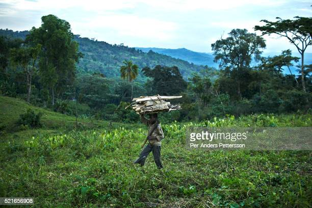 Boy walks on a field after picking firewood in the forest on December 6, 2012 outside Bonga, Ethiopia. This Kaffa region is known for its coffee...