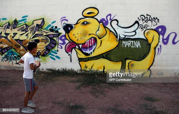 A boy walks past a mural paint in honor of Frida the rescuer dog of the Mexican Navy's canine unit in Juarez Chihuahua State Mexico on September 26...