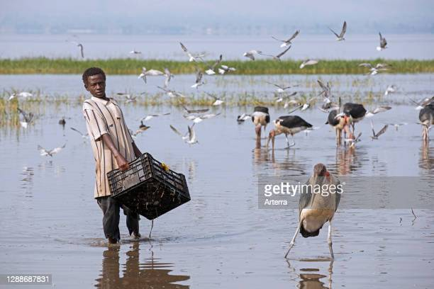 Boy washing caught fishes among marabou storks in Lake Hawassa for local fish market in the city Awasa, Great Rift Valley, Southern Ethiopia, Africa.