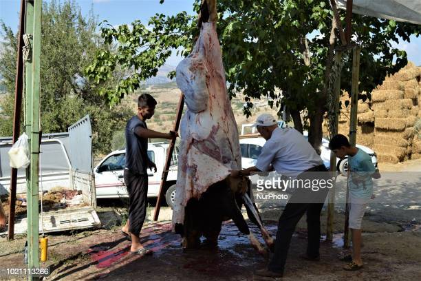 A boy watches as people butcher a sacrificial animal on the first day of Eid alAdha in southern Kahramanmaras province of Turkey on August 21 2018
