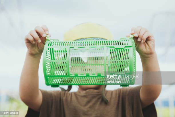 boy watching an insect in insect cage - cicada stock pictures, royalty-free photos & images