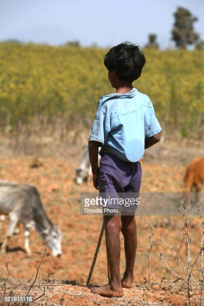Boy watching over cattle with Tiffin box kept inside his shirt in Jharkhand, India