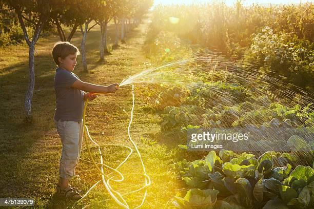 Boy Watering Garden, Croatia, Slavonia, Europe