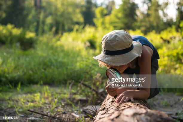 boy with a magnifying glass in a forest - insetto foto e immagini stock
