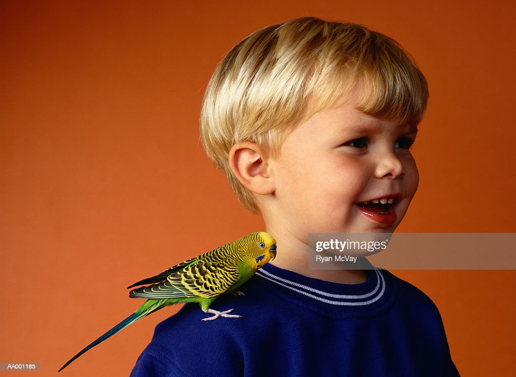 Boy with a Parakeet Perched on His Shoulder : Stock Photo