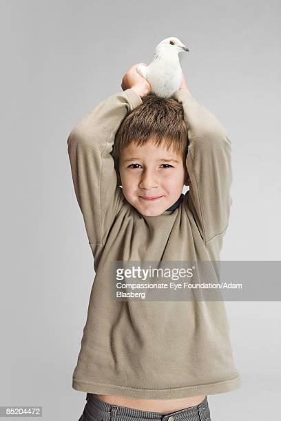 """boy with a pigeon on his head - """"compassionate eye"""" fotografías e imágenes de stock"""