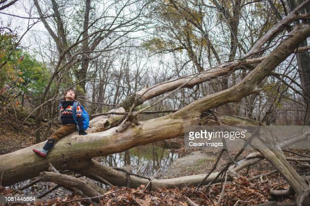 Boy with backpack sitting on fallen tree against sky in forest