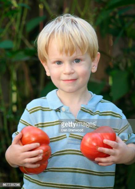 boy with big brandywine tomatoes - dan sherwood photography stock pictures, royalty-free photos & images