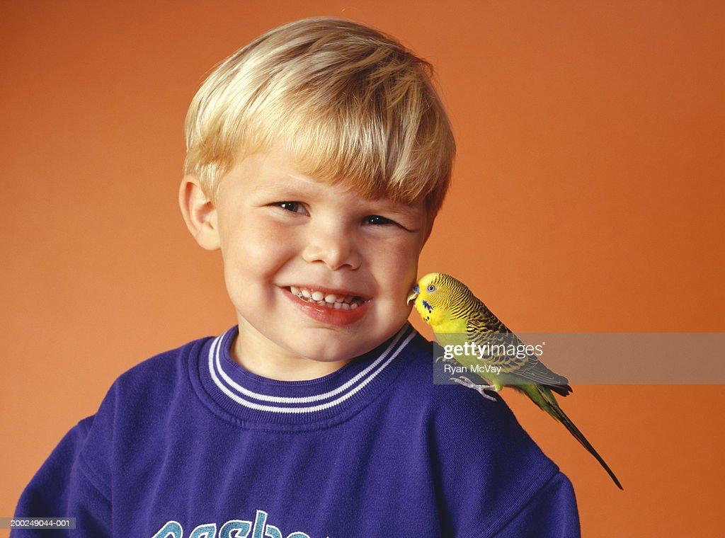 Boy (4-5) with budgerigar on shoulder, (Portrait) : Stock Photo