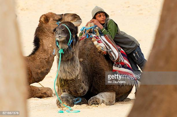 boy with camels, sahara desert, tunisia - bo zaunders stock pictures, royalty-free photos & images
