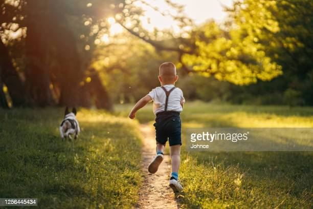 boy with dog in nature - toddler stock pictures, royalty-free photos & images