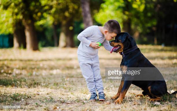 boy with his dog - rottweiler stock photos and pictures