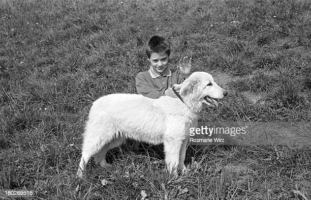 boy with his maremma sheepdog - pastore maremmano foto e immagini stock