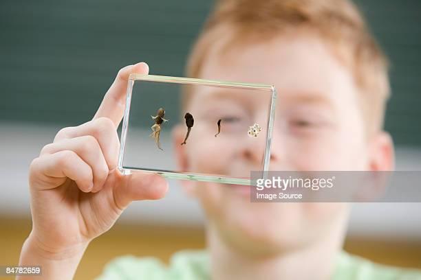 boy with tadpole stages in glass - huevos de rana fotografías e imágenes de stock