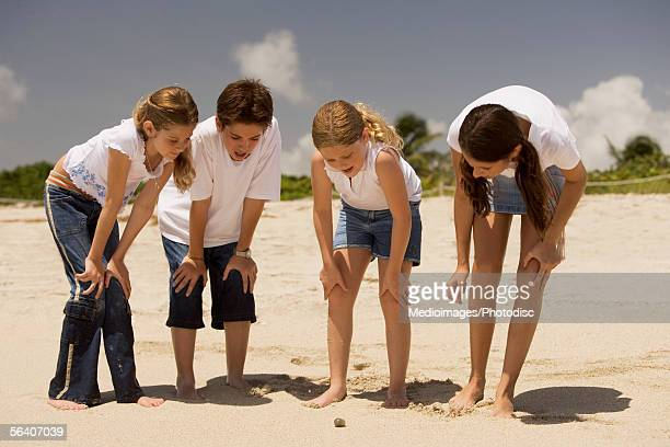 boy with three children looking at a seashell on the sand - little girls bent over stock photos and pictures