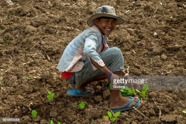 Boy working in a farm Battambang Cambodia