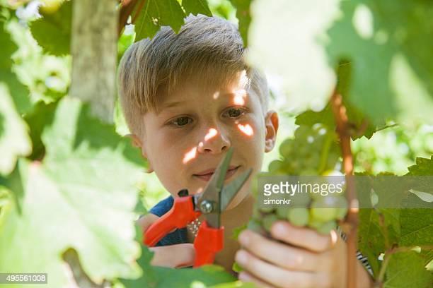 Junge Arbeiten im Weingut