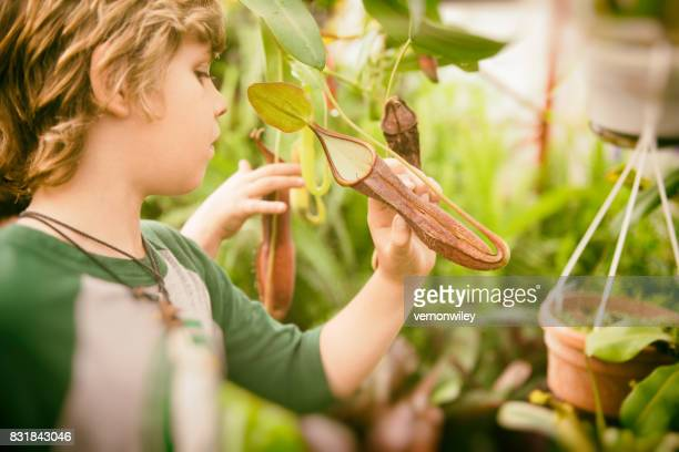 boys and their family explore and play in ecuador - carnivorous stock pictures, royalty-free photos & images