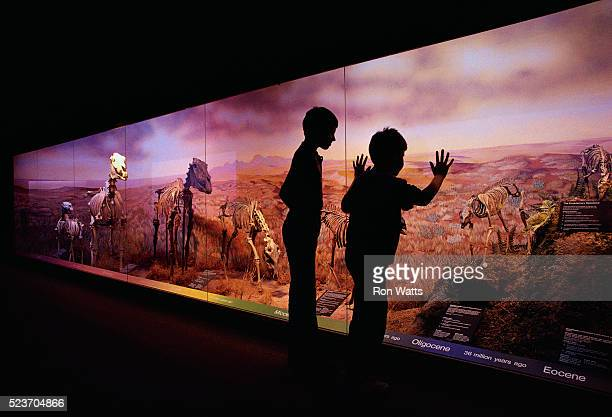 boys at natural history museum - natural history museum stock pictures, royalty-free photos & images