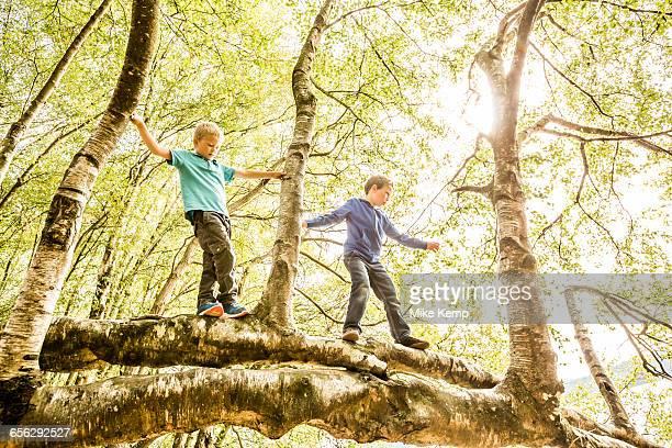 Boys (6-7, 8-9) climbing branch