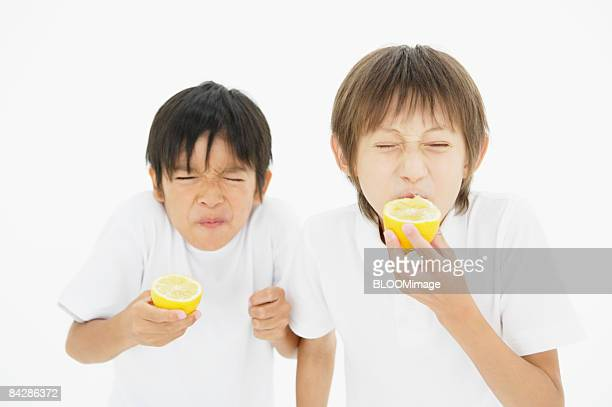 Boys eating lemons, studio shot