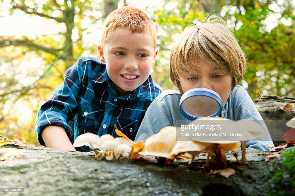 Boys examining mushrooms in forest : Stock Photo