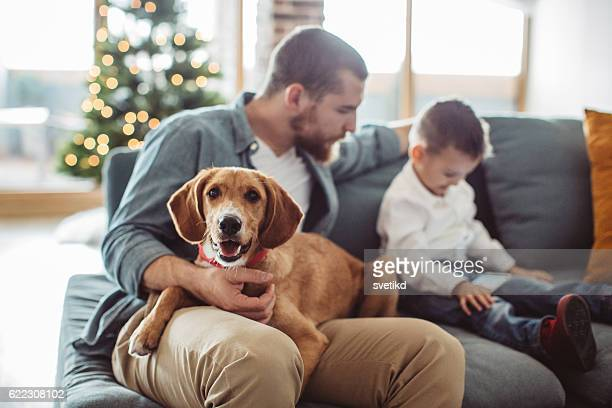 boys fun time. - christmas dog stock pictures, royalty-free photos & images