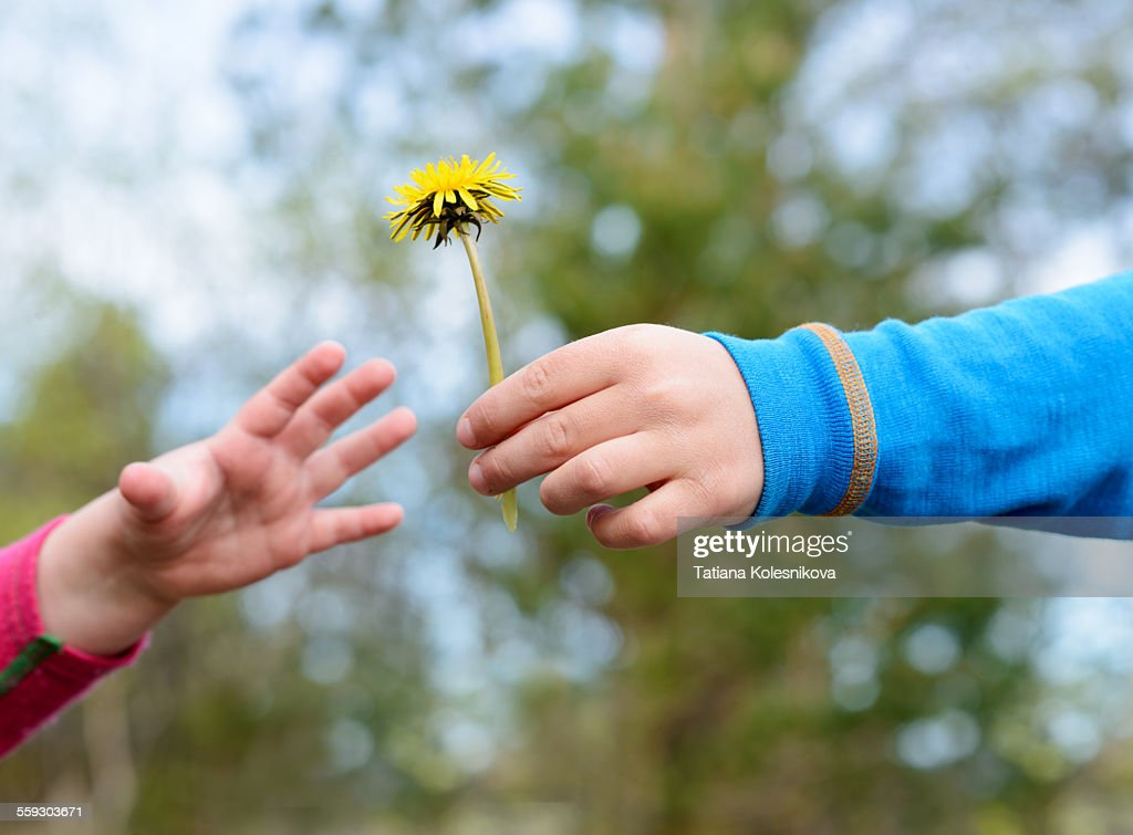 boys hand giving a flower to younger girl stock photo getty images