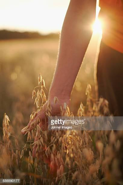 Boys hand holding oats