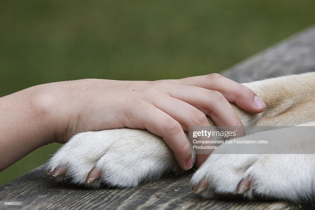 Boy's hand resting on his dog's paw : Stock Photo