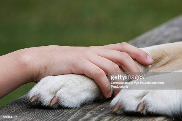 Boy's hand resting on his dog's paw
