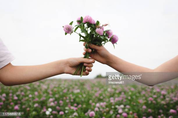 boy's hand taking clover flowers - receiving stock pictures, royalty-free photos & images