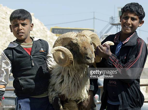 Boys hold a sheep as they stand in the back of a truck parked at a livestock market as people prepare for the upcoming Eid alAdha holiday in Amman on...
