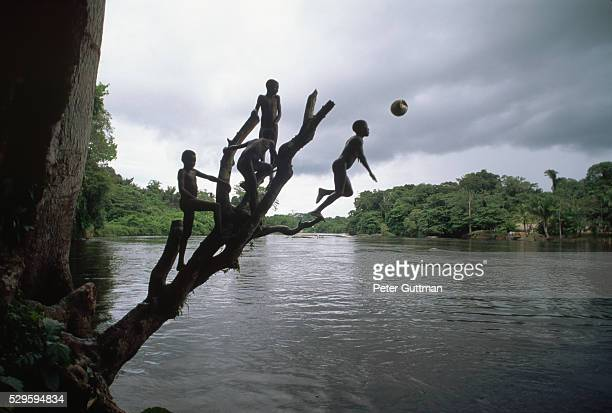 Boys Jumping Off Dead Tree into River