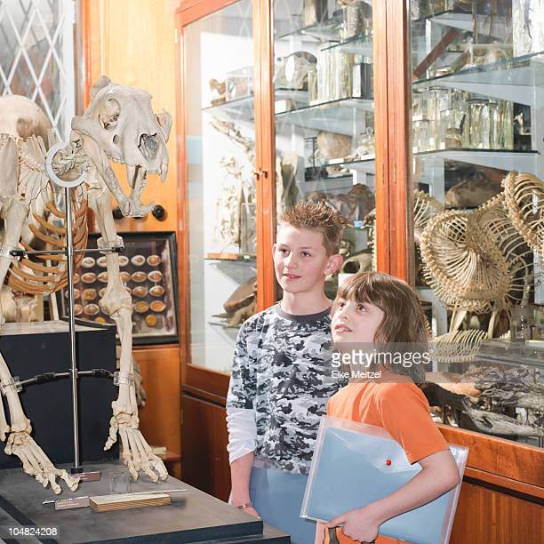 2 boys looking at tiger skeleton