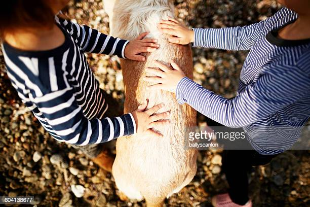 Boys petting a dogs back
