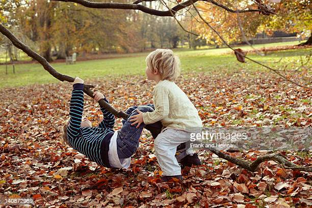 Boys playing on tree outdoors