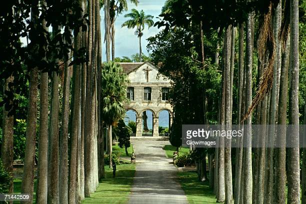 A boy's private school is seen on a palm lined avenue on the island of Barbados, Caribbean