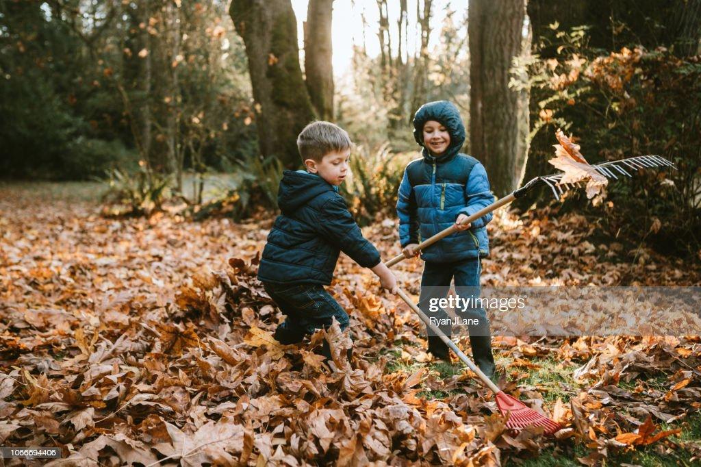Pojkar kratta upp höstlöv : Bildbanksbilder