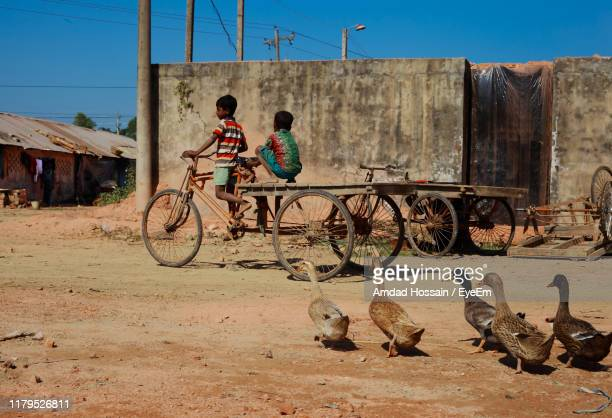 boys riding cart on dirt road by birds against clear sky - amdad hossain stock pictures, royalty-free photos & images
