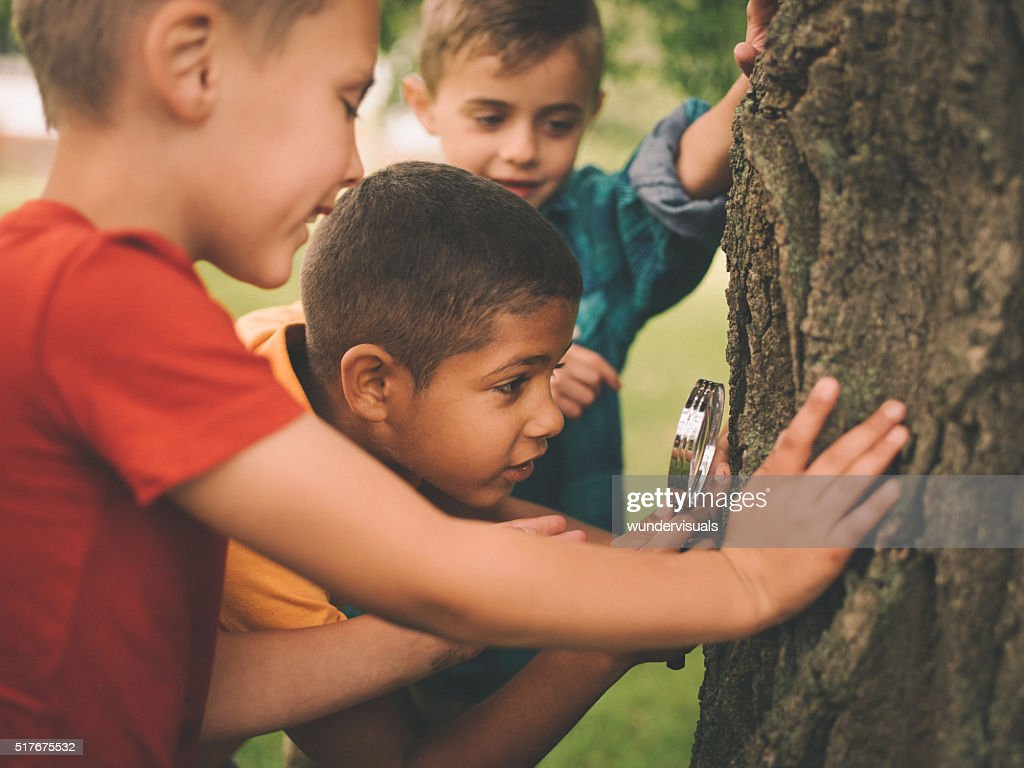 Boys studying a tree trunk with a magnifying glass : Stock Photo