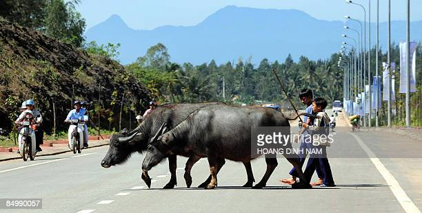 Boys walk their water buffaloes across a newly built road leading to Vietnam's first oil refinery at Dung Quat on February 22, 2009 in the central...