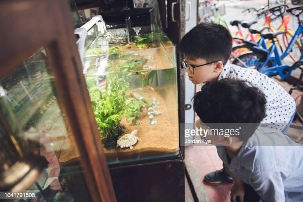 Boys watching fishing tank