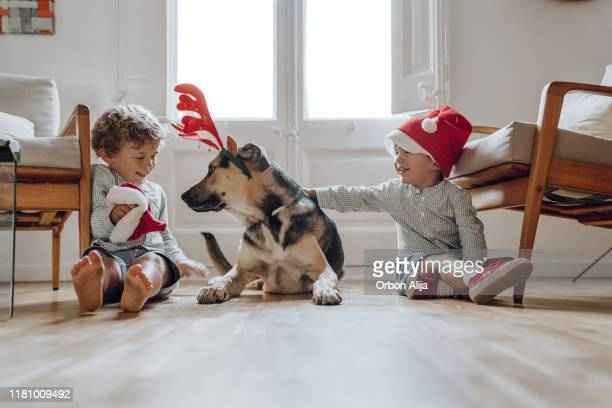 boys wearing chritmas hats playing with dogs - christmas dog stock pictures, royalty-free photos & images