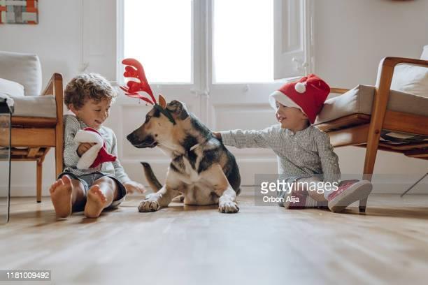 niños con sombreros de chritmas jugando con perros - decoración objeto fotografías e imágenes de stock